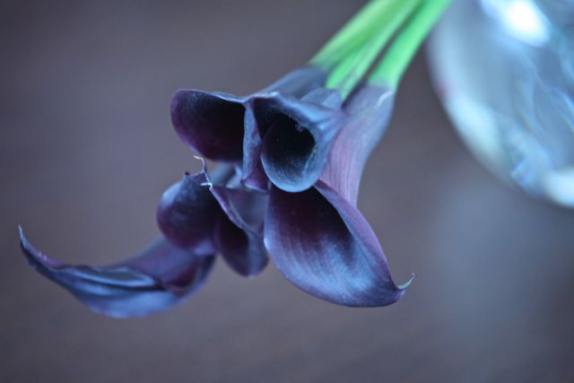 Dorinha Paella flor 2