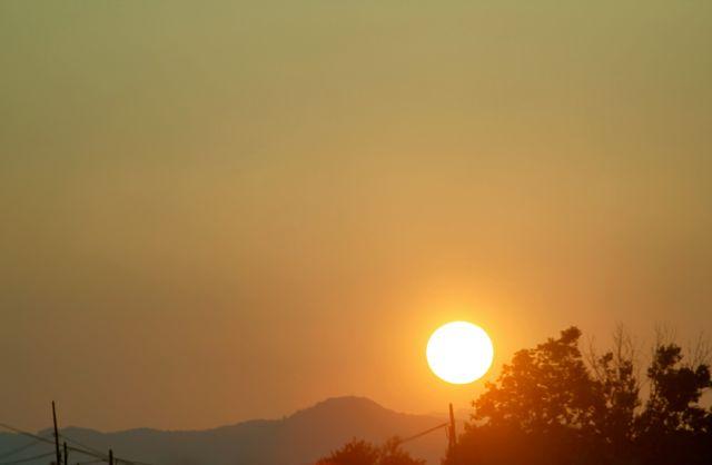 El Celer sol
