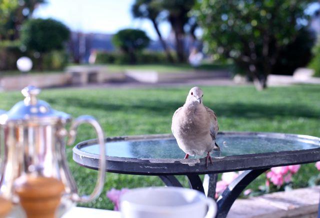 MONACO passarinho