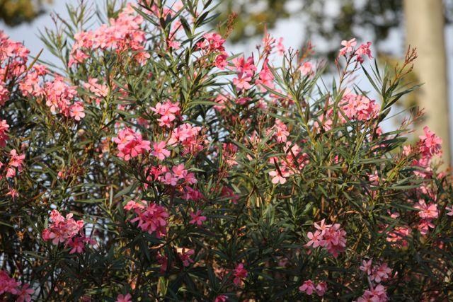 DOMAINE flores