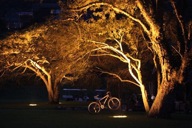 BOTANIQUE bicicleta