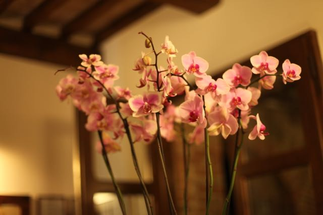 Banfi flores