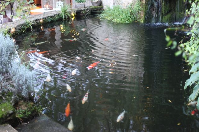 Borgo peixinhos