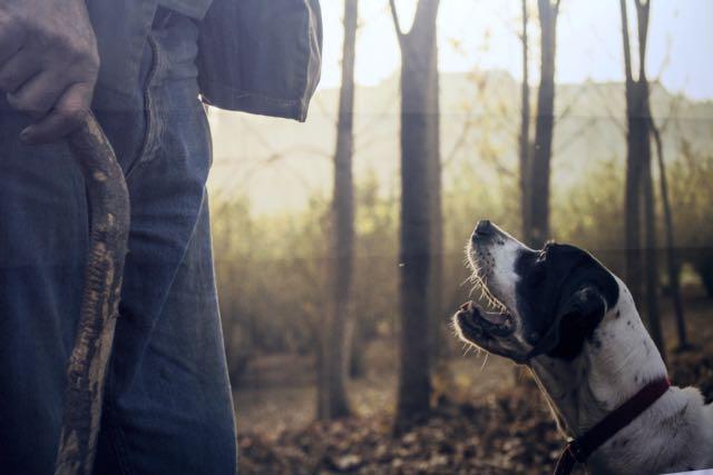 alba-cachorro